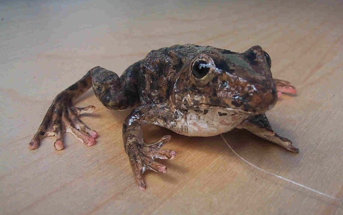 frog_alone